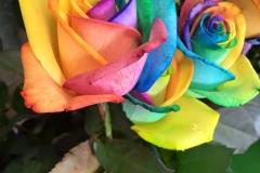 Multicoloured Flower Closeup
