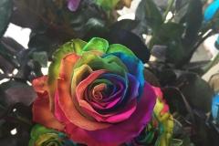 Multicoloured Flower3