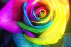 Multicoloured Heads Single