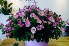 Lilac Green Pot
